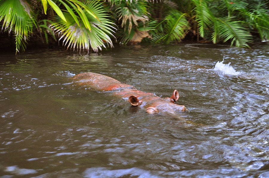 Murky waters of the Jungle Cruise